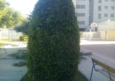 Poda de arbustos en Castellón